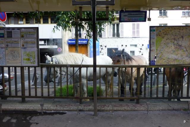 Lâcher de cochons devant la gare Montparnasse Manifp14