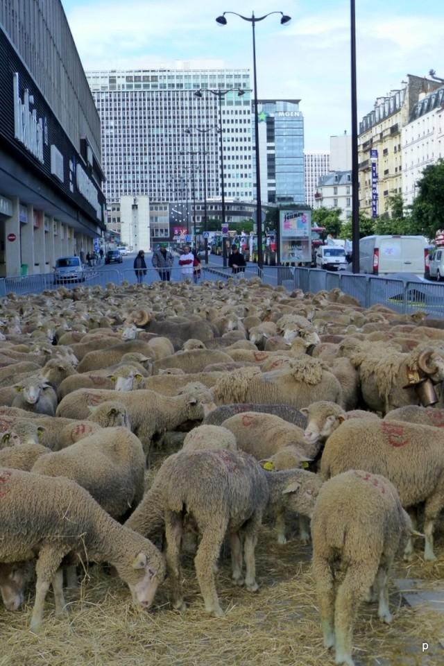 Lâcher de cochons devant la gare Montparnasse Manifp19