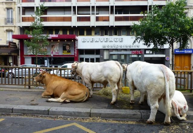 Lâcher de cochons devant la gare Montparnasse Manifp20