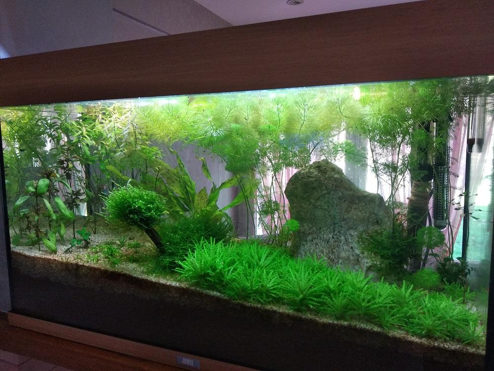 Mon aquarium Aqua10