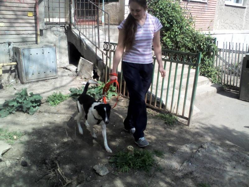 Pepita, née en septembre 2012 Img44610