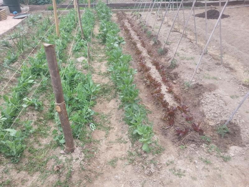 semis en terre 20130410