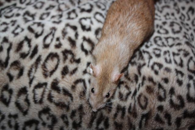 Recherche petite ratoune vaucluse/drome Img_0611