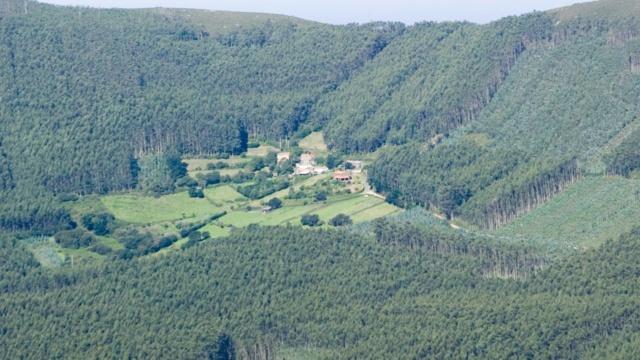 Más eucaliptos,  más   coníferas. Consecuencias de la sed de beneficio$ en la húmeda Galicia. El sector forestal. - Página 5 Gd28p210