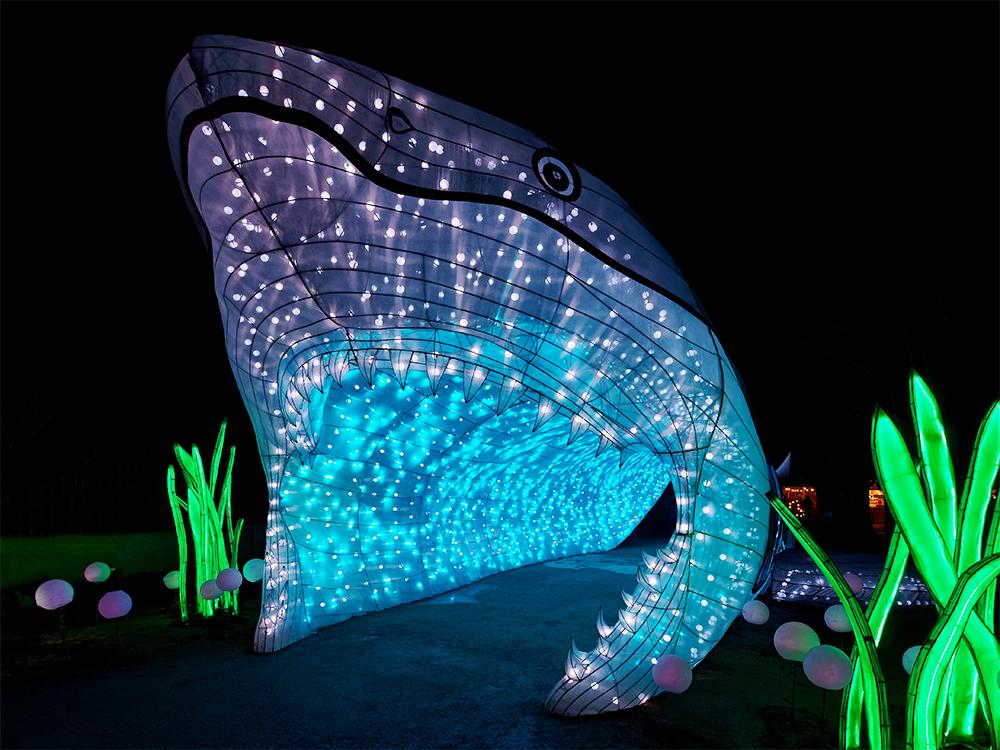 [Inclassables] Océan en voie d'illumination, le grand requin blanc Oczoan10