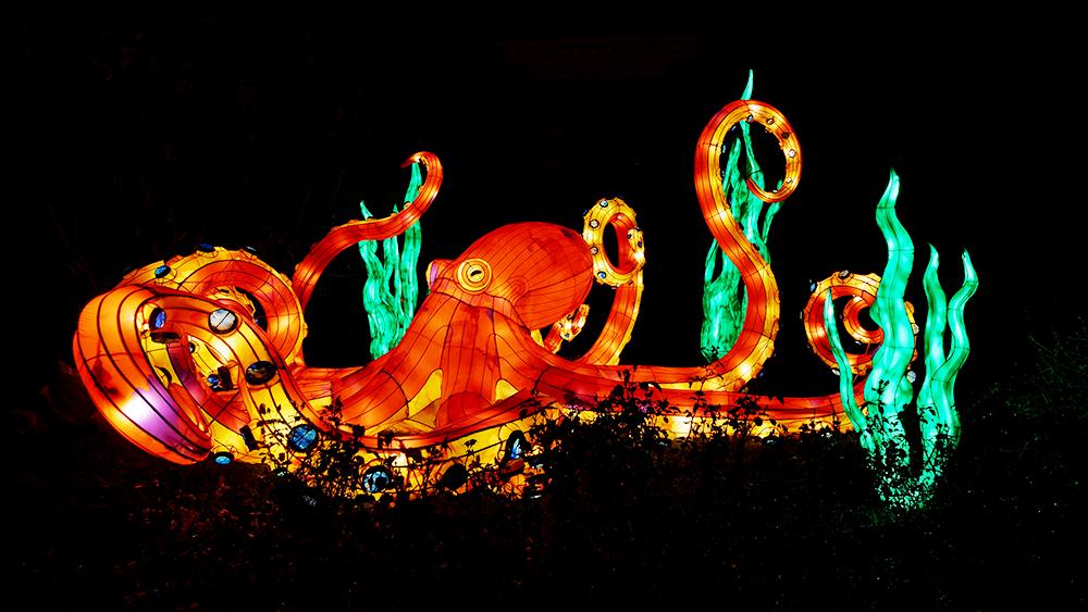 [Inclassables] Océan en voie d'illumination, octopus Oczoan16