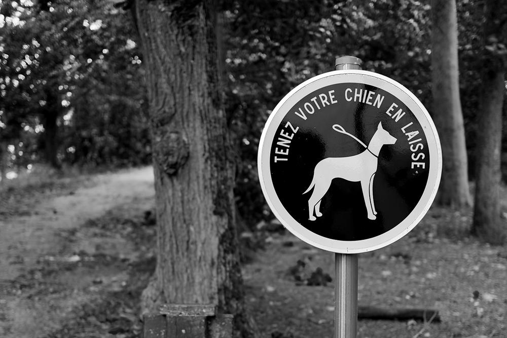 [Noir_et_Blanc] Tenez votre chien en laisse P1070511