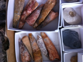 fossils for sale (downsizing my collection) 08410