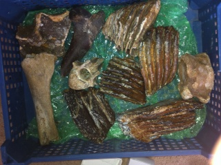 fossils for sale (downsizing my collection) 09510
