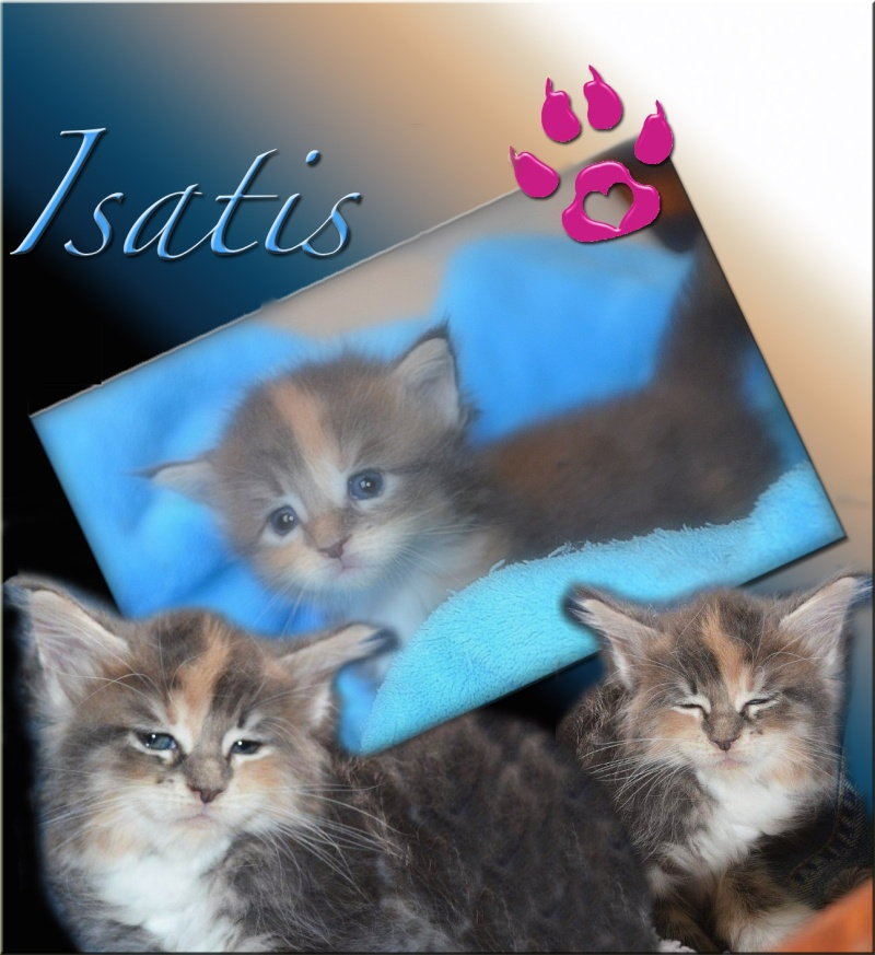 Princesse Isatis Isatis11
