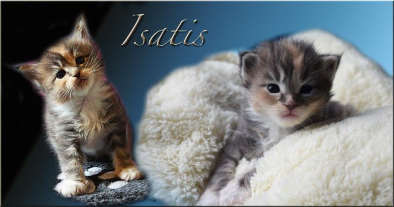 Princesse Isatis Isatis13
