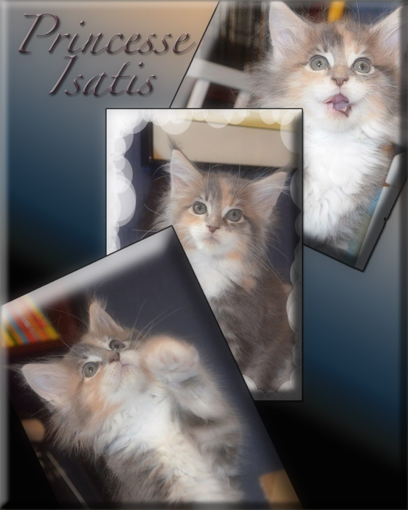 Princesse Isatis Isatis23