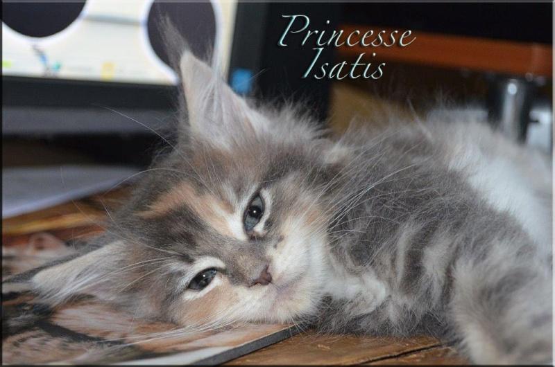Princesse Isatis Montpr10