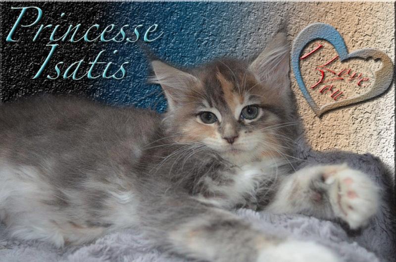 Princesse Isatis Prince13