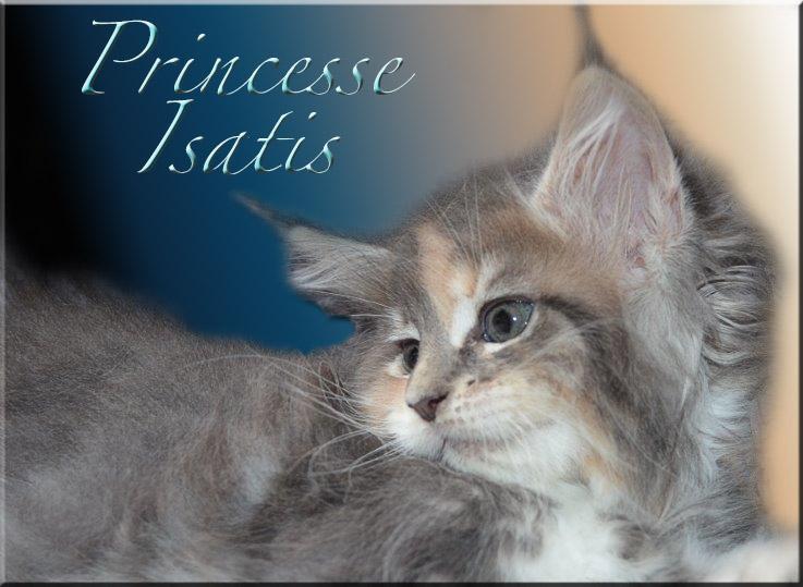 Princesse Isatis Prince14