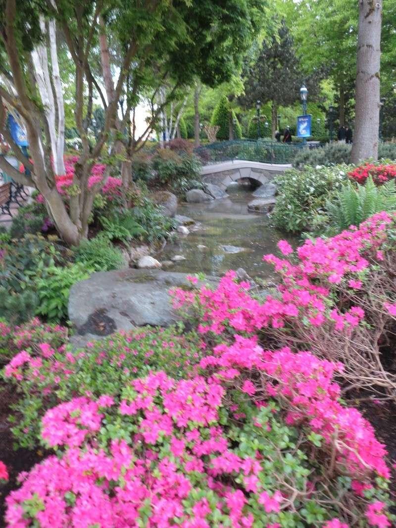 Les Jardins, Les Fleurs et l'Eau au DLP - Page 6 Img_9310