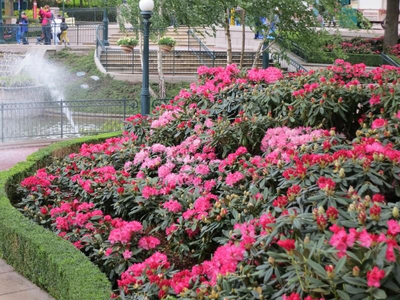 Les Jardins, Les Fleurs et l'Eau au DLP - Page 6 Img_9312