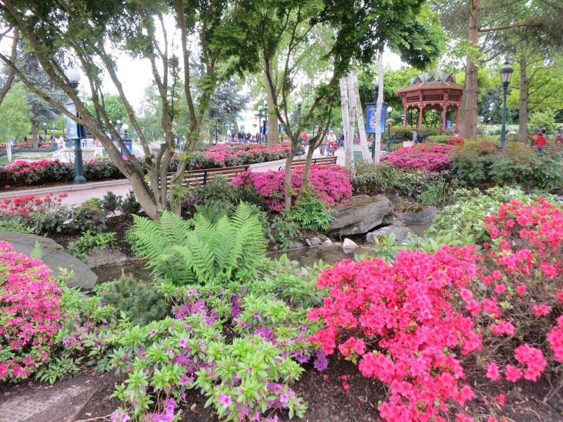 Les Jardins, Les Fleurs et l'Eau au DLP - Page 6 Img_9313
