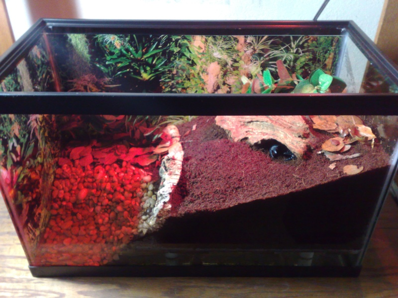 [HOW TO] False bottom Emperor enclosure with pool 12062015