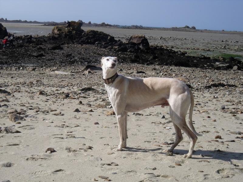 fuimos a la playa :gandal et maestro ce 1 er mai Dscf3410
