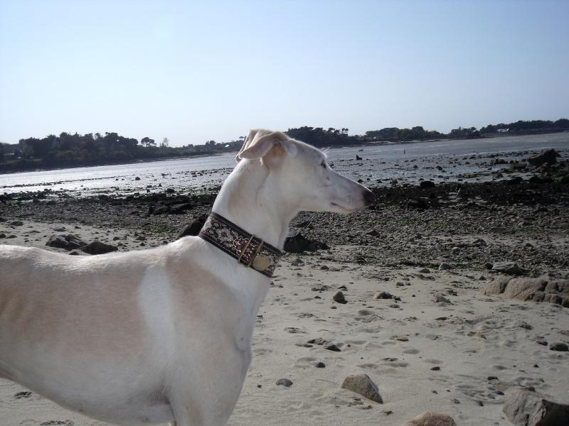 fuimos a la playa :gandal et maestro ce 1 er mai Dscf3412