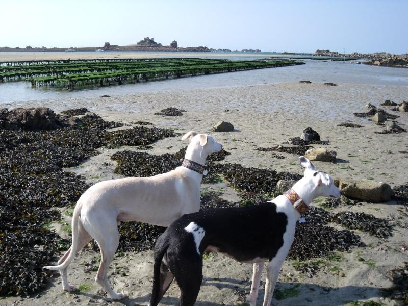 fuimos a la playa :gandal et maestro ce 1 er mai Dscf3512