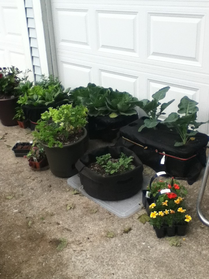 Container Gardening Contai14