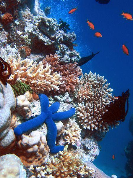 [Australie] Menace sur la Grande Barrière de Corail Gbcora10
