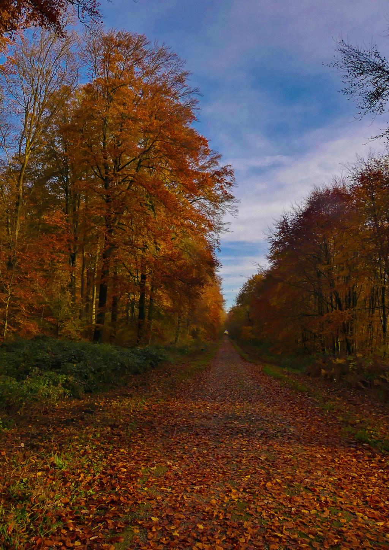 couleur d ' automne Balade10