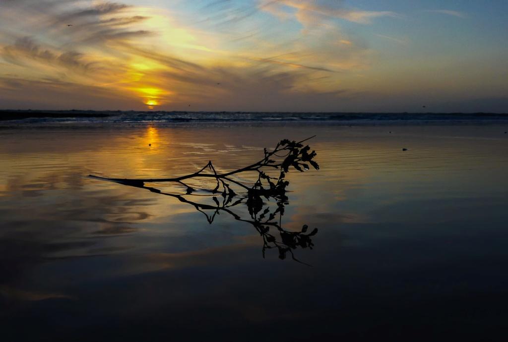 coucher de soleil et reflet d ' une branche de lilas de Mer Lilas_13
