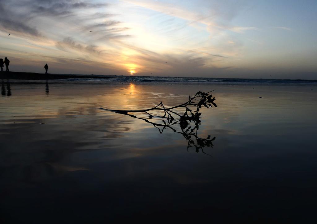 coucher de soleil et reflet d ' une branche de lilas de Mer Lilas_15
