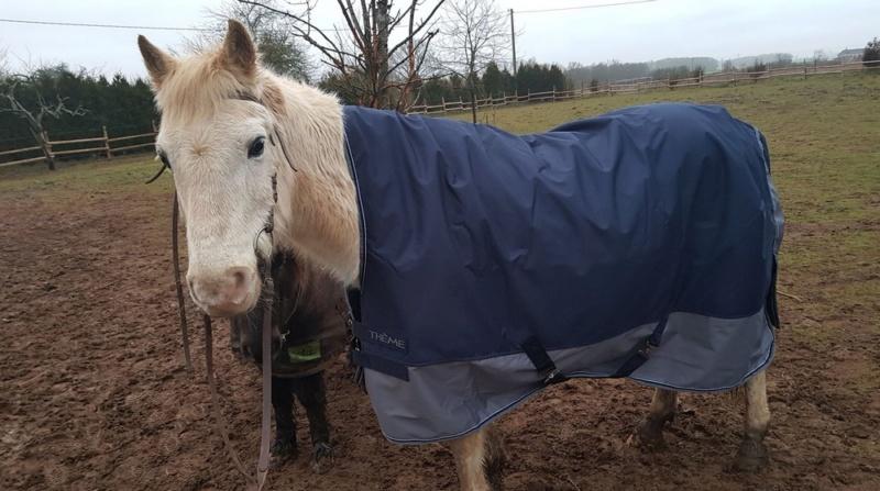 GRIBOUILLE - ONC poney né en 1994 - adopté en août 2009 par caro41 0012