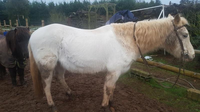 GRIBOUILLE - ONC poney né en 1994 - adopté en août 2009 par caro41 0114