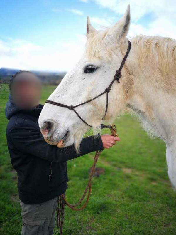(45) LAVALLIERE – Jument Trait Boulonnais née en 1999 – Non montable - Frais d'adoption 50€  01_2_l13