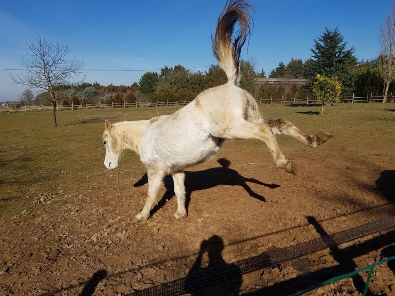 GRIBOUILLE - ONC poney né en 1994 - adopté en août 2009 par caro41 0414