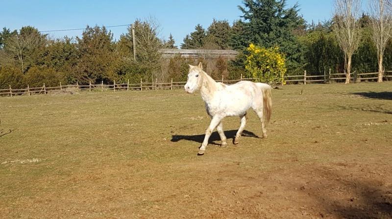 GRIBOUILLE - ONC poney né en 1994 - adopté en août 2009 par caro41 0514