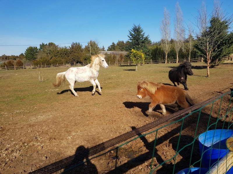 GRIBOUILLE - ONC poney né en 1994 - adopté en août 2009 par caro41 0714
