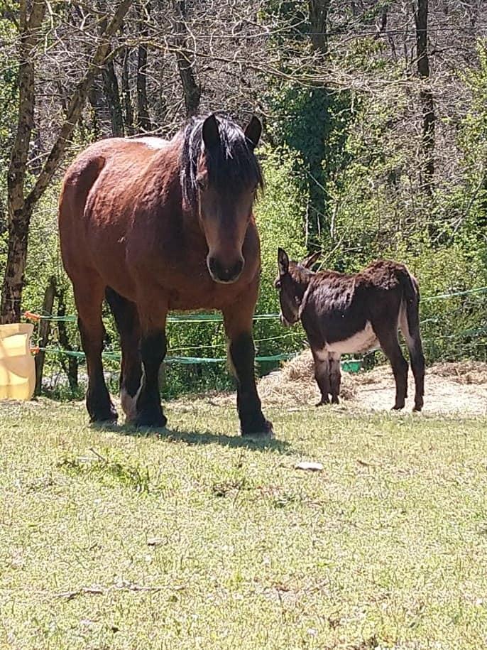 BOURRIFEE, renommée JOSETTE (dite PÉPÉTTE) - ONC âne née en 2010 - adoptée en août 2011 par Stephele12 - Page 3 0720