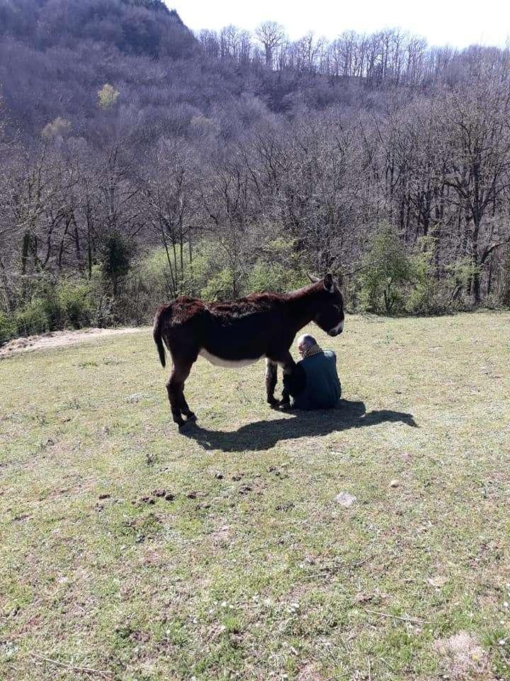 BOURRIFEE, renommée JOSETTE (dite PÉPÉTTE) - ONC âne née en 2010 - adoptée en août 2011 par Stephele12 - Page 3 0813