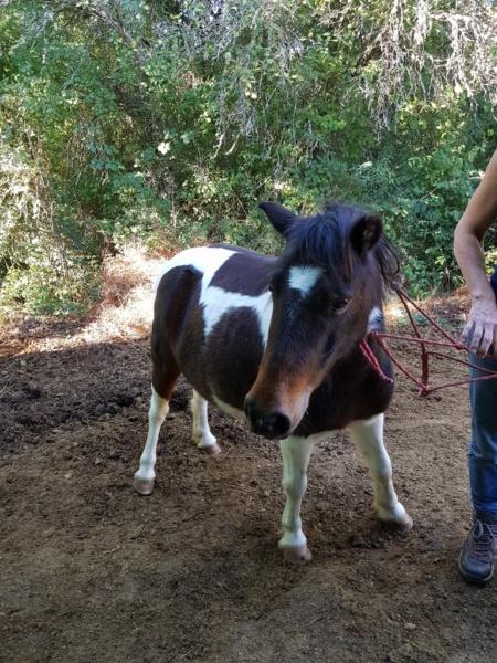 CANNELLE - ONC poney née en 2009 - adoptée en décembre 2013 par Catie - Page 3 1116