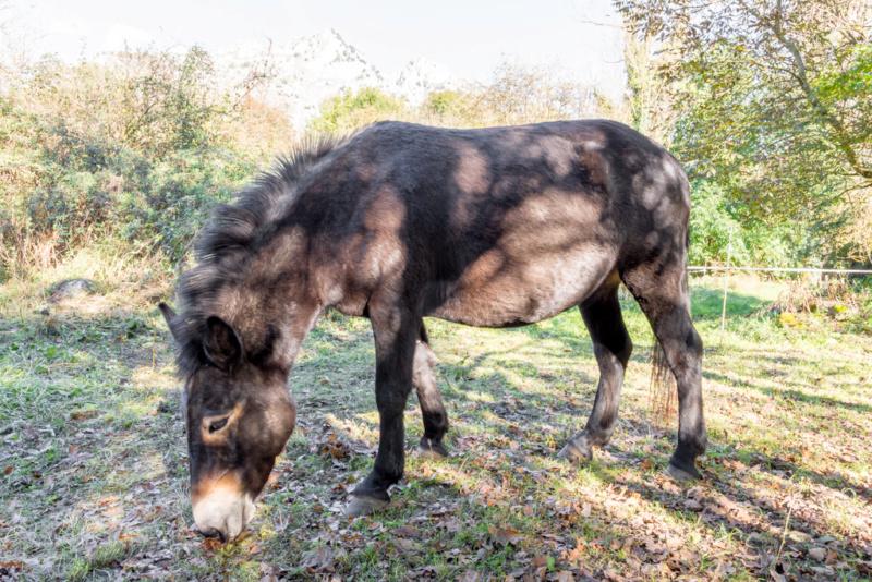 VIOLETTE dite PETALE - ONC Mule née en 2006 - adoptée en octobre 2012 par Jean 1126