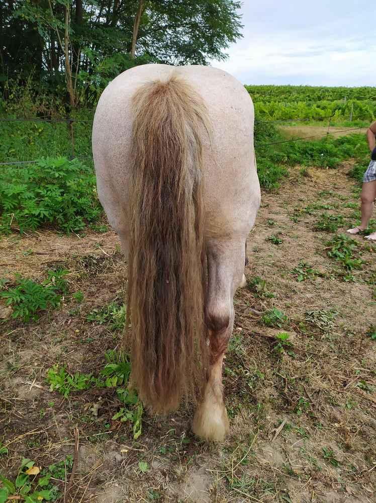 ULYSSE (Trait Breton) & UNIK (Breton X Percheron) nés en 2008 - adoptés en décembre 2008 par Fanny - Page 3 13_20218