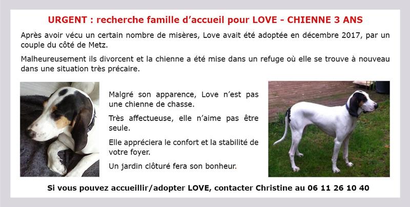 LOVE : chienne 3 ans - adoptée 2018_024