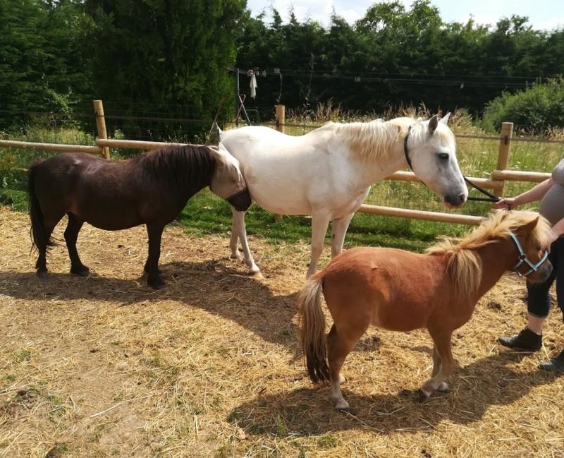 GRIBOUILLE - ONC poney né en 1994 - adopté en août 2009 par caro41 2018_091