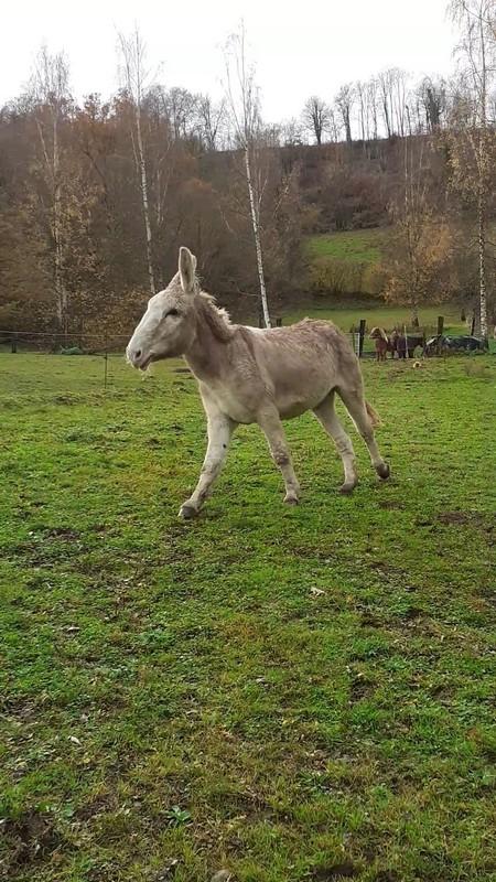 POTIRON - ONC âne né en 2001 - adopté en juin 2020 par Valérie 20191053