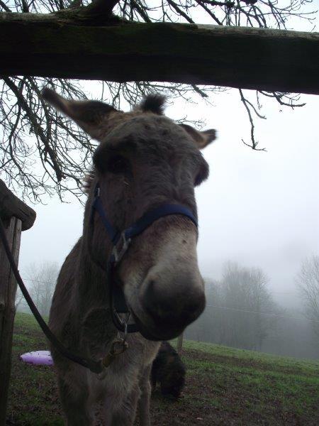 BOURIQUET - ONC âne né en 2009 - adopté en août 2017 par Marie - Page 2 2019_065