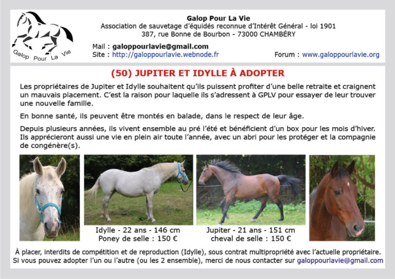(50) JUPITER – Cheval de Selle Hongre né en 1997 – Montable pour balades – 150 € + don libre à GPLV 2019_073