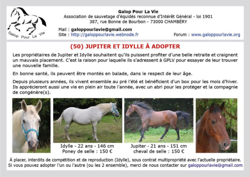 (50) IDYLLE - Jument Poney de selle née en 1996 - Montable pour balades - 150 € + don libre à GPLV 2019_074
