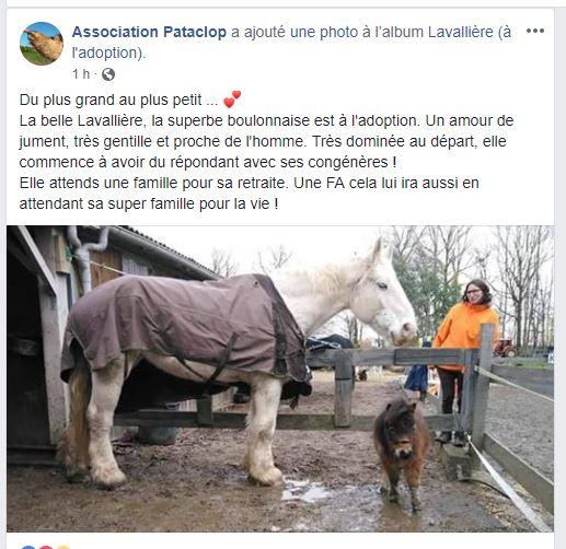 LAVALLIERE – Trait Boulonnais née en 1999 – accueillie en refuge en octobre 2018, décédée le 22.02.2019  2019_137