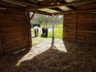 VAVAVROUM (2010) et APACHE(2009) - ONC poneys type Shetland - adoptés en mars 2019 par Sylvie 2019_214